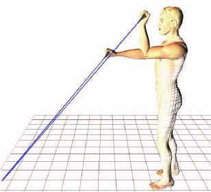 brachialis exercise - photo #22